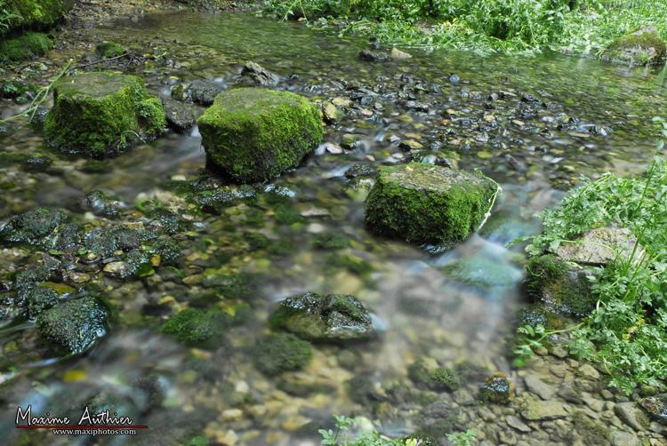 Détails rivière près de Montrozier