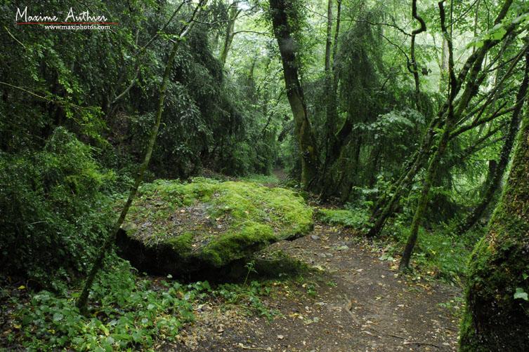 Chemins forestiers près de Montrozier